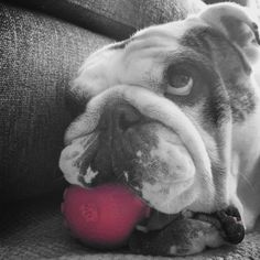 I didn't put the  a squeak in this ball