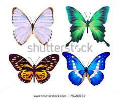 four colorful butterflies