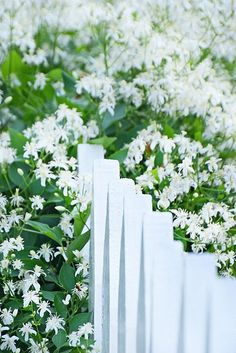 This looks like the tiny little white clematis that I love.  They are not only beautiful but fragrant.  ~ Mel