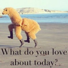 What Do You Love About Today