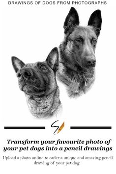 Order amazing hand drawn pencil drawings of dogs. Transform your favourite photo of your pet dogs into a pencil drawing.