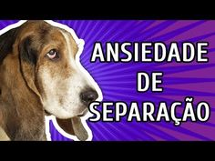 Ansiedade de Separação: medo de ficar sozinho em casa | Tudo Sobre Cachorros