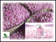 Les sublimes Roses de Mai et parfum Star de Frédéric M
