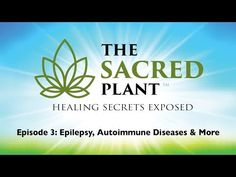 The Sacred Plant: Healing Secrets Exposed - Episode 1 Medical Information, Medical Advice, Natural Cancer Cures, Natural Remedies, Natural Healing, Sacred Plant, First Relationship, Natural Health Tips, Cancer Treatment