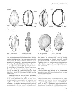 Australian Seeds: A Guide to Their Collection, Identification and Biology - Google Books