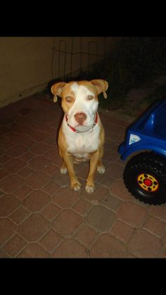 LOST NAME Sadie DESCRIPTION Female that is spayed may be with my other dog a black lab/pit mix. Sadie will be wearing a pink collar DATE LAST SEEN April-06-2016 AREA LAST SEEN Phoenix, AZ 85027 ADDRESS LAST SEEN 3930 West Rose Garden Lane, Glendale, AZ, United States PHONE (602) 614-2153