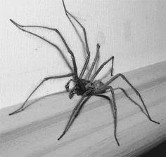 The perfect Spider Trippy Aracnophobia Animated GIF for your conversation. Discover and Share the best GIFs on Tenor. Scary Optical Illusions, Cool Illusions, House Spider, Creepy Animals, Illusion Pictures, Insect Tattoo, Woodworking Software, Spider Tattoo, First Animation