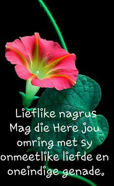 Good Night Blessings, Goeie Nag, Good Night Quotes, Afrikaans, Qoutes, Thoughts, Sayings, Sweet Dreams, Gallery