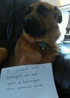 """Dog Shaming:  """"The Hamburglar"""""""