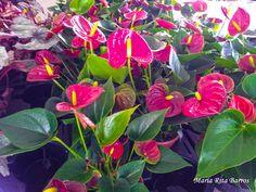 UPIS_FOTO_042016_ATIVIDADE 03_FLORES 3