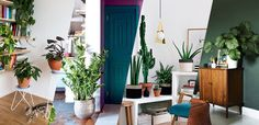Decoração com plantas: 17 ideias para ter um jardim em casa