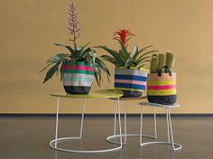 Samba for Living Club Tropicana, Sweet Home, Summer Paradise, Samba, Beautiful Flowers, Planter Pots, Indoor, Canvas, Decoration