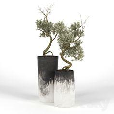 Choosing the Right Pergola Design Indoor Olive Tree, Indoor Trees, Green Plants, Green Flowers, Unique Gardens, Beautiful Gardens, Flower Planters, Flower Pots, Planting Succulents