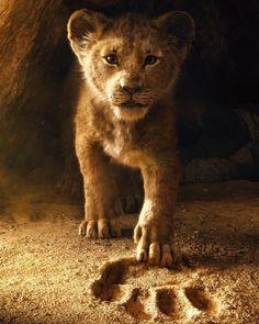 Lion Wallpaper Hd Animals Lion Iphone 6 Plus Wallpaper Tat Animals