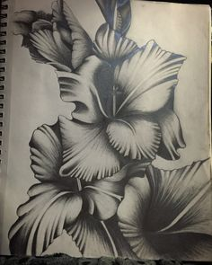 1000 images about Flowers drawing