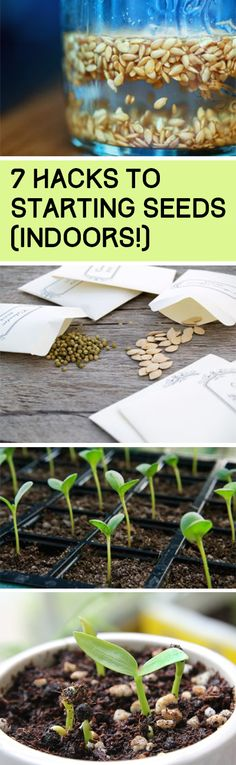 Seed Gardening, Seed Hacks, Sdeed Starting Hacks, Gardening, Vegetable Garden, Herb Gardening, Popular Pin, Gardening 101, Gardening Tips and Tricks, Gardening Hacks