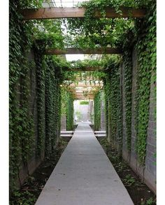 Contemporary steel & timber pergola draped in Boston Ivy. Source via #Pinterest
