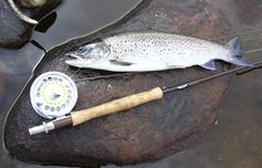 http://www.garyborger.com/wp-content/uploads/2012/08/13-Sea-Trout-on-rock-with-roid.gif
