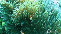 The perfect dive every time 👌😎💦🐠🐳🐬🐡🐟 Marina Resort, Anemones, Marine Life, Scuba Diving, Underwater, Sea, Adventure, Diving, Adventure Game