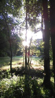 De langzaam ondergaande zon door de bomen.