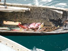 Tropical fish delivery in the San Blas Islands  Photo by: Suzie Kendrick