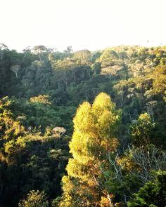 Greenery / Verde que te quero ver. #natureza #nature #riointerior #mountains #errejota #brasil #instapic #miguelpereira