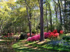 29 lugares incríveis ao redor do mundo que se transformam em jardins celestiais 18