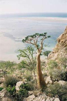 La isla ¿prehistórica?