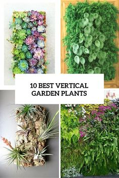 10 Best Vertical Garden Plants With Care Tips