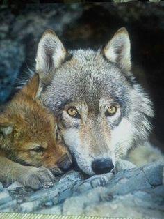 6910b29993bb108b8cc84caa2af53afe--baby-animals-wild-animals.jpg (480×640)