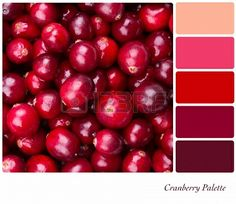 A background of fresh, juicy cranberries  Colour palette with complimentary colour swatches Stock Photo - 16811284