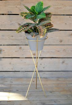 Creative Pot Ideas For Your Home Decor! House Plants Decor, Plant Decor, Home Decor Styles, Home Decor Accessories, Home Decor Furniture, Diy Home Decor, Decoration Plante, Tree Shop, Plant Lighting