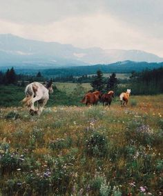 horses, running wild and free Pretty Horses, Horse Love, Beautiful Horses, Animals Beautiful, Cute Animals, Wild At Heart, Foto Cowgirl, Into The Wild, Wild Horses
