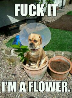 dont know why, but animal humor is so funny!