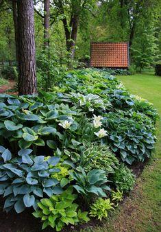 The hosta border Garden, Shade garden, Backyard landscaping desig.