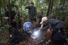 Borneo Expedition 2015