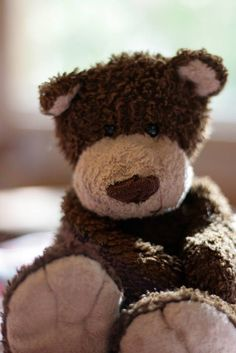 LOST in Adelaide, Australia Dark brown teddy bear answers to Bear Bear. Much loved friend to my daughter, very missed. Have looked everywhere and cannot even find another bear that looks the same. Any help is appreciated! Contact: https://www.facebook.com/lauren.fox.3597 or :https://www.facebook.com/TeddyBearLostAndFound
