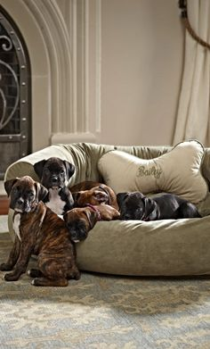Our best-in-class Comfy Pet Couch is crafted as well as sofas designed for people.