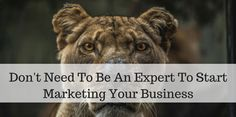 Many people believe you need to be an expert to start marketing youronline business. That is so wrong in many ways. When you start blogging and putting out content if you focus on education you will soon realize that there are many people out there that need to be educated. Doesn t matter if it is [ ] The post Don t Need To Be An Expert To Start Marketing Your Business appeared first on Mark Nelson Online.