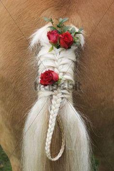 Horse tail decorated with roses, Georgiritt pilgrimage, Upper Bavaria, Germany Beautiful Horse Pictures, Beautiful Arabian Horses, Majestic Horse, Horse Mane Braids, Horse Hair Braiding, Horse Fancy Dress Costume, Horse Costumes, Cute Horses, Pretty Horses