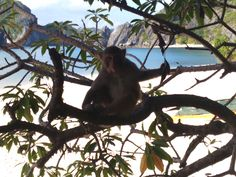 Monkey Island - Lan Ha Baie Monkey Island, Vietnam Tours, Panther, Animals, Animales, Animaux, Panthers, Animal, Animais