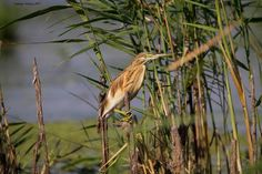 _Q2E0362 Danube Delta, Boat Tours, Bird Watching, Landscape, Scenery, Corner Landscaping