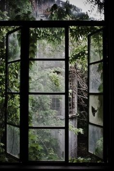 Altes Fenster voller Pflanzen Old window full of plants house