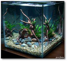 Aquarium Sand, Aquarium Garden, Aquarium Landscape, Tropical Fish Aquarium, Aquarium Setup, Aquarium Design, Aquarium Fish Tank, Aquarium Ideas, Aquariums