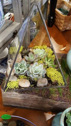 Triangle of succulent plants  with river stones and moss.