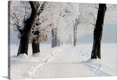 Premium Thick-Wrap Canvas Wall Art Print entitled Winter country road, None