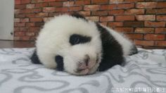 I want to keep on sleeping, I do not want get up.