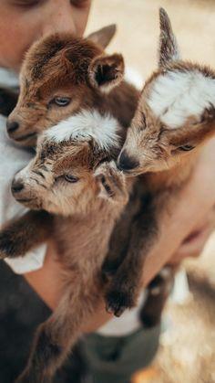 Baby Farm Animals, Baby Animals Super Cute, Cute Wild Animals, Baby Animals Pictures, Cute Baby Dogs, Cute Little Animals, Cute Animal Pictures, Cute Funny Animals, Animals Beautiful