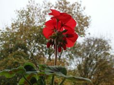 Podzimní Muškát :-)