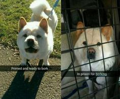 When this pupper got in trouble. | 19 Snapchats That Are Too Wholesome To Be True